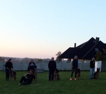 Niedzielne szkolenie owczarków niemieckich,na sportowo._1