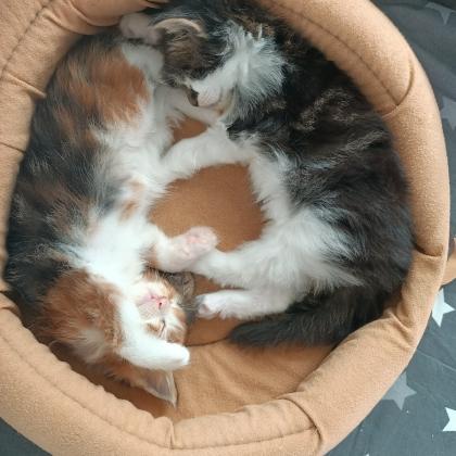 koty mają 4 tyg_1