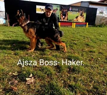 Ajsza- Ami Boss-Haker. 5miesięcy ._1