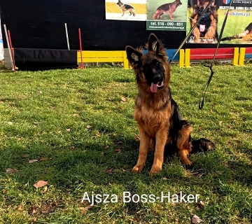 Ajsza- Ami Boss-Haker. 5miesięcy ._2