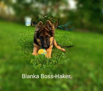 Blanka  Boss-Haker. Odwiedziny w hodowli._1